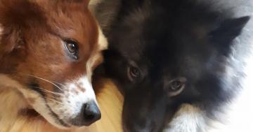 Toffee mit Hündin der Tiersitterin - Ziemlich beste Freunde