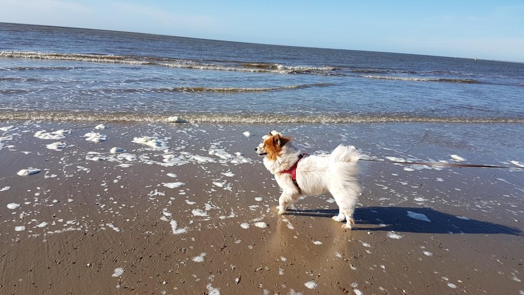 Hund sieht und riecht zum ersten Mal das Meer