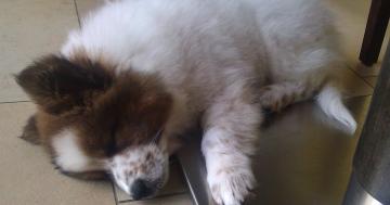 Elo Wepe Toffee schläft gerne auf kalter Unterlage
