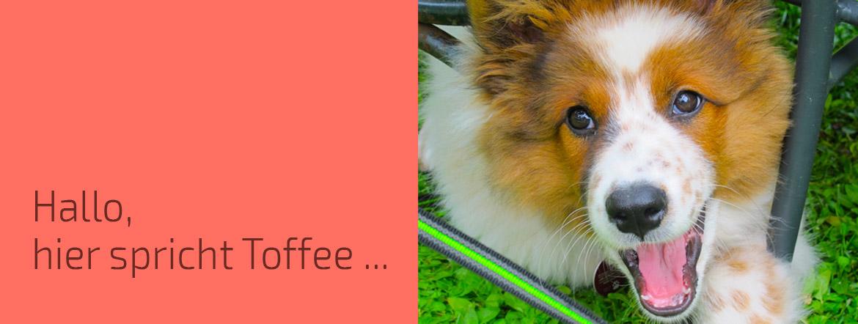 Hallo, hier spricht Toffee - Titelbild