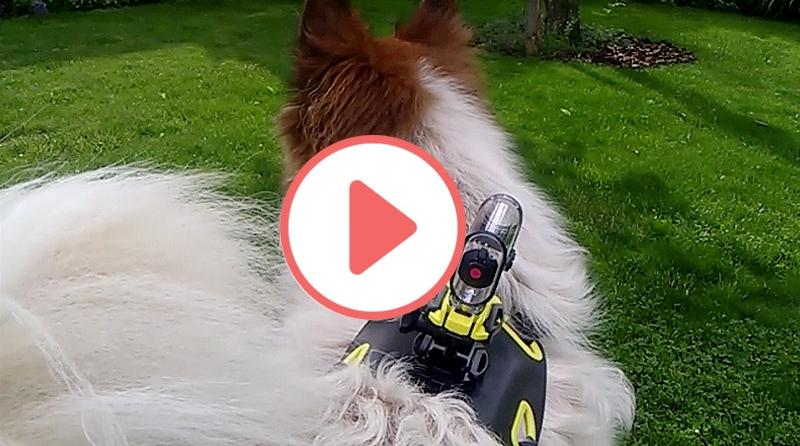 Kamerahund Toffee Blog