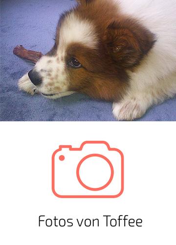 Fotos von Toffee