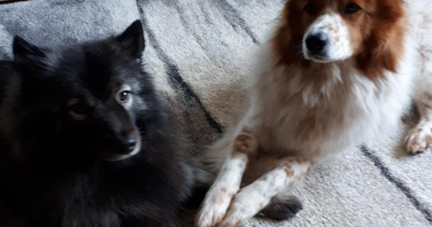 Elo Toffee mit Hund der Tiersitterin