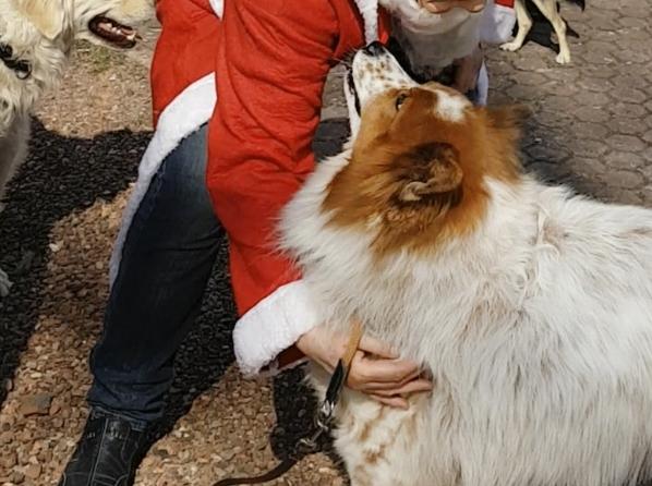 Elo Toffee in der Ausbildung zum Besuchhund DRK