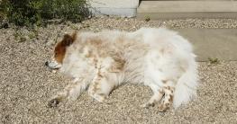 Hund nimmt intensives Sonnenbad