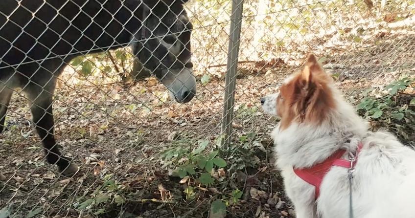 Elo Toffee betrachtet sich einen Esel aus nächster Nähe