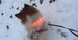 Leuchthalsband zur Sicherheit