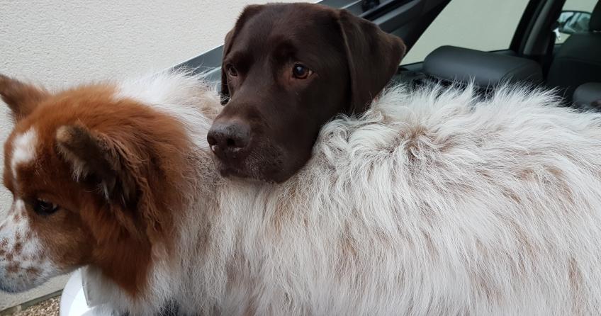 Hund Toffee und Hundesitter Rudel