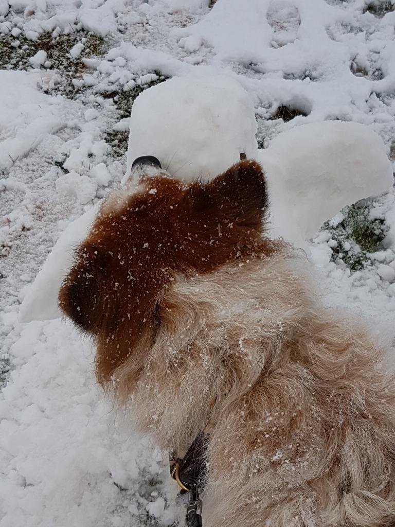 Eiskaltes Suchspiel für jeden Hund