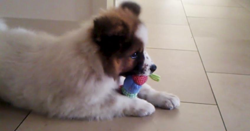 Elo Hund Spielt mit Raupe