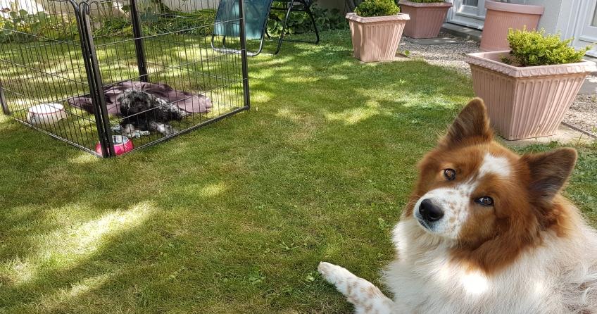 Hund hütet Hund - Tiersitter Toffee Blog