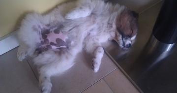Schlafende Hunde weckt man nicht