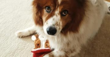 Lieblingsspiele mit Hund Toffee