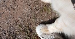 Hundepfote _füsseln