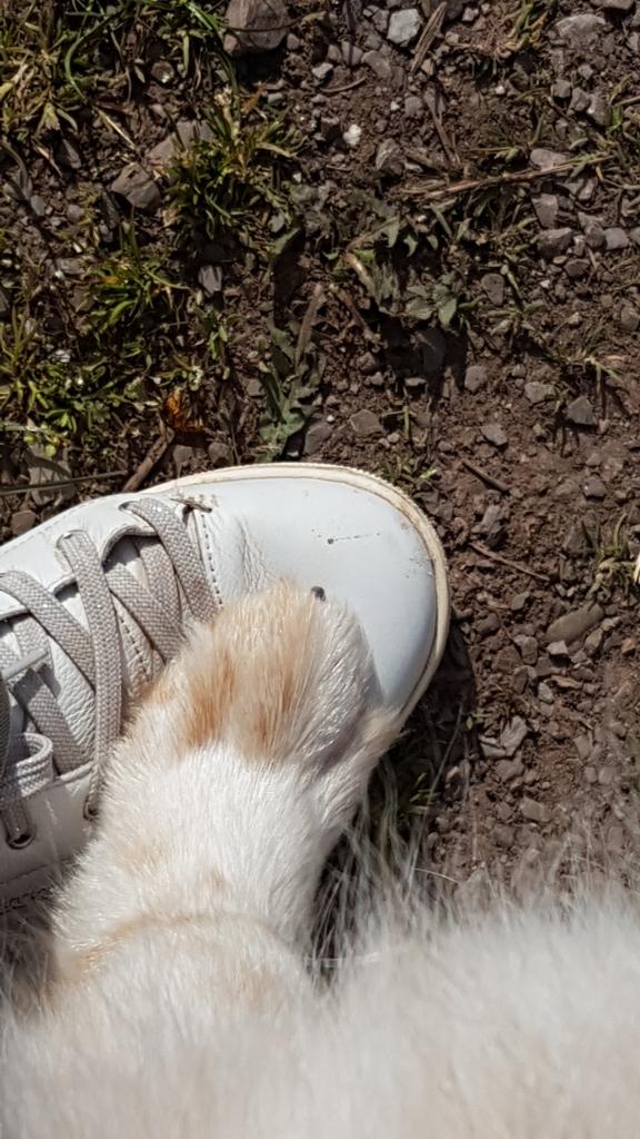 Hundepfote auf Schuh