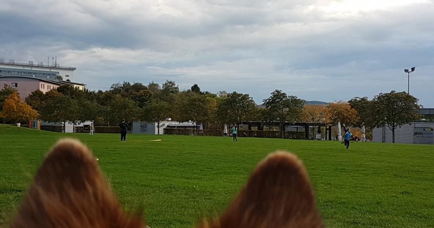Elo Hund beobachtet Drachen im Herbst